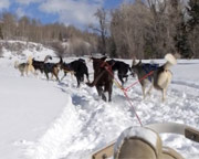 Dog Sled Adventure Tour, Park City - 1 Hour Ride 2 Adults 1 Child