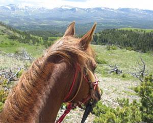 Horseback Riding, Glacier National Park - Half day