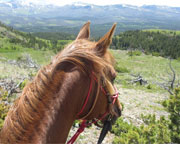 Horseback Riding, Glacier National Park - Half day