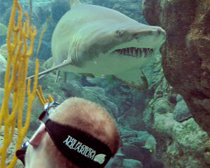 Shark Dive, Florida Aquarium - Tampa