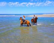 Horseback Riding Santa Cruz, Hecker Pass - 2.5 Hours
