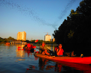Kayak Tour Austin, Congress Ave Bridge Bat Tour - 2 Hours