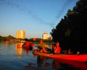 Kayak Tour Austin, Congress Ave Bridge Bat Tour - 2 Hours