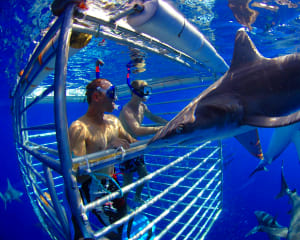Shark Cage Dive Oahu, North Shore - 2 Hours