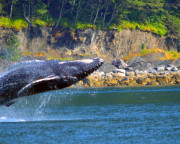 Whale Watching Adventure, Juneau - 3 Hours