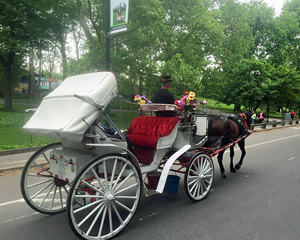 Private Central Park Horse and Carriage Ride, for 4 - 45 Minutes