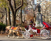 Private Central Park Horse and Carriage Ride, for 2 - 45 Minutes