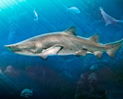 Shark Swim Tampa - 30 Minutes