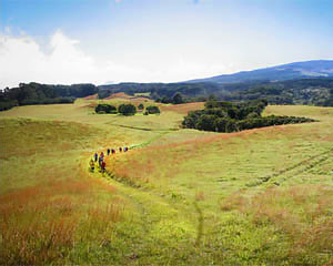 Upcountry Hiking Tour Maui - 3 Hours