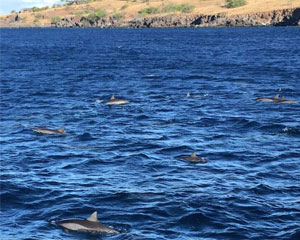 Dolphin Snorkel Cruise, Kona-Kohala Coast - 3.5 Hours