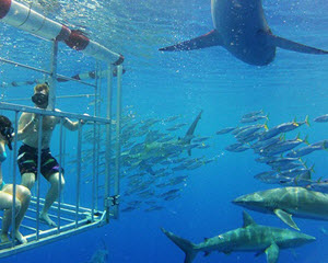 Shark Cage Dive Hawaii, Oahu's North Shore - 2 Hours