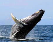 Whale Watching Tour Oahu, North Shore - 2 Hours