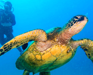 Discover Scuba Diving Oahu - Half Day (2 Real Dives, No Certification Required!)