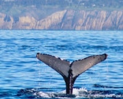 Tandem Kayak Tour La Jolla with Whale Watching - 2 Hours