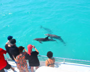 Key West Day Sail, Dolphin Watch and Snorkel Experience - 3 Hours