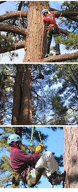 Tree Rope Climbing Big Bear Lake
