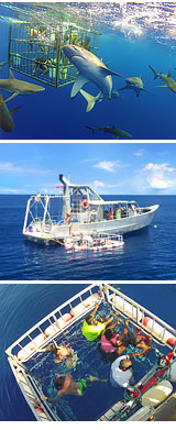 Shark Cage Dive Hawaii Oahu